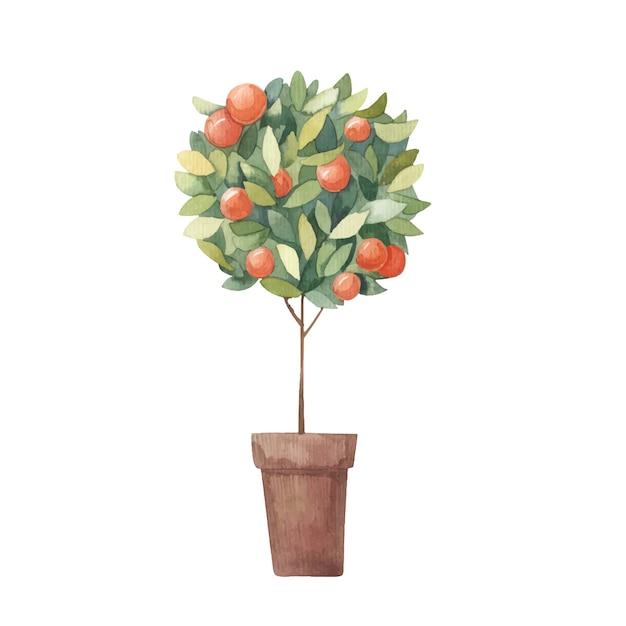 Tangerine, Drzewo Cytrusowe Akwarela Ilustracja Na Białym Tle Premium Wektorów