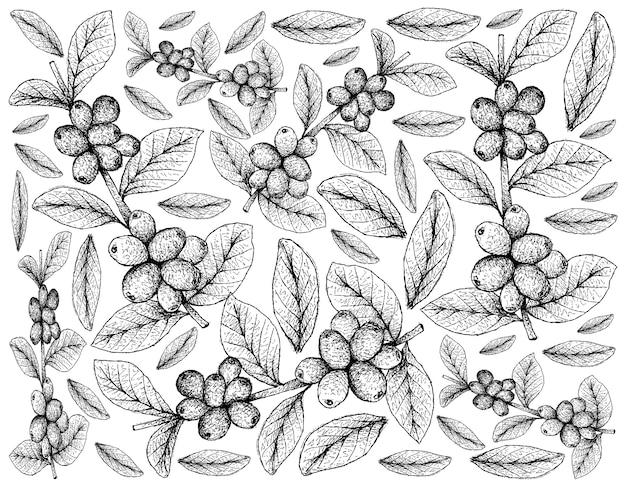 Tapeta Ilustracja Owoce Tropikalne Ręcznie Rysowane Szkic Premium Wektorów