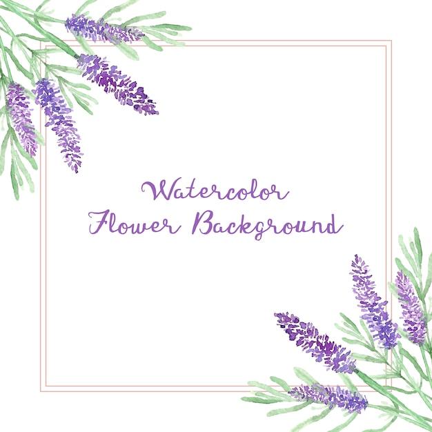 Tło Akwarela Kwiat Lawendy Premium Wektorów