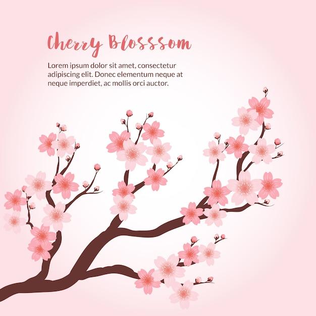 Tło cherry blossom Darmowych Wektorów