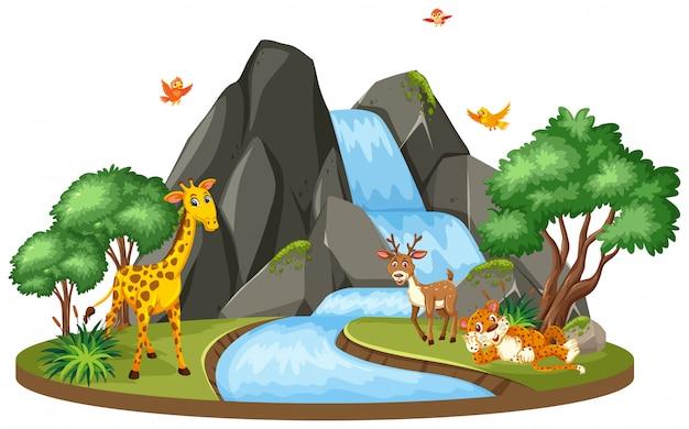 Tło scena żyrafa i tygrys przy siklawą Premium Wektorów