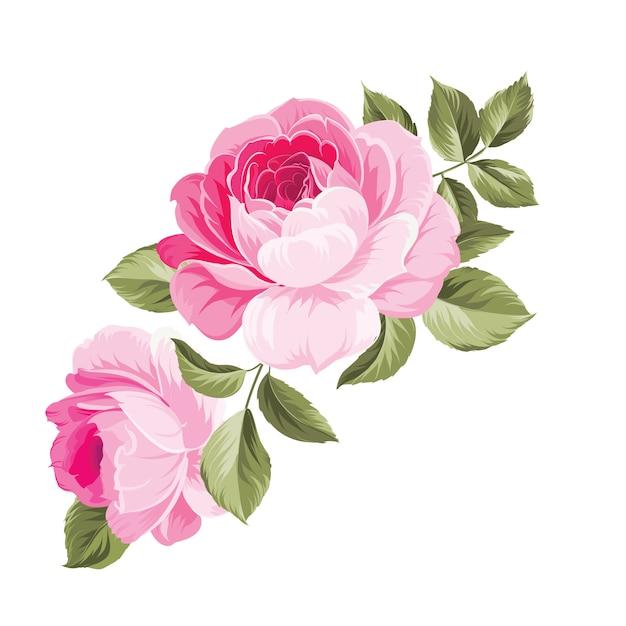 Tło Z Różami. Premium Wektorów