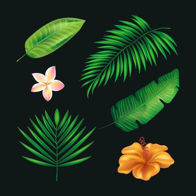 Tropikalna Kolekcja Kwiatów I Liści Darmowych Wektorów