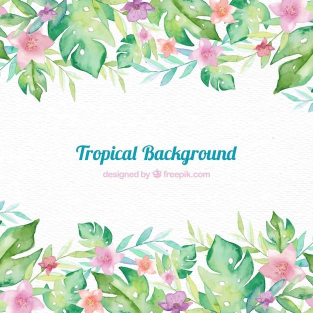 Tropikalna ramka w tle Darmowych Wektorów
