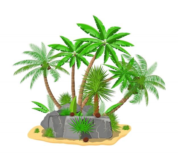 Tropikalna Zielona Palma. Liście Dżungli Premium Wektorów
