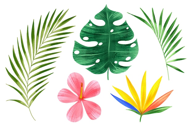 Tropikalne Kwiaty I Kolekcja Liści Darmowych Wektorów