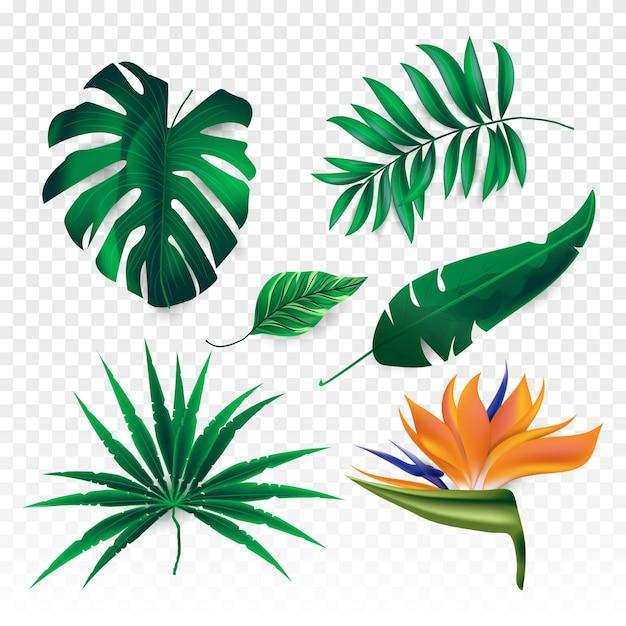 Tropikalne Kwiaty I Liście Darmowych Wektorów