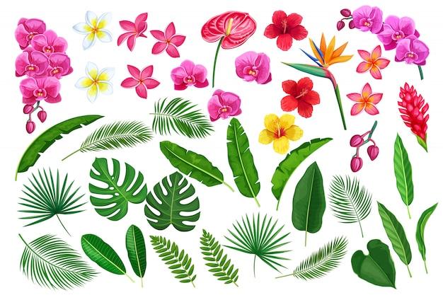 Tropikalne Liście I Kwiaty Premium Wektorów