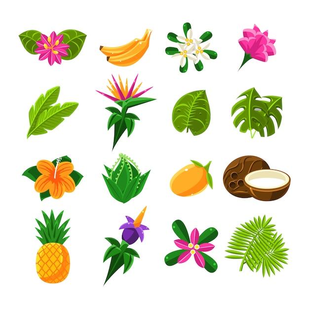 Tropikalne Owoce Egzotyczne I Flora Zestaw Ikon Premium Wektorów