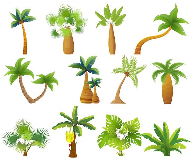 Tropikalne Palmy Na Białym Tle. Premium Wektorów