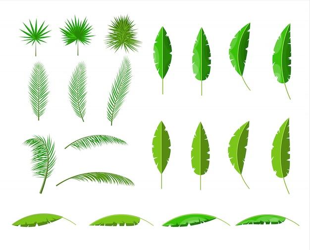 Tropikalne Zielone Liście. Zestaw Liści Dżungli. Premium Wektorów