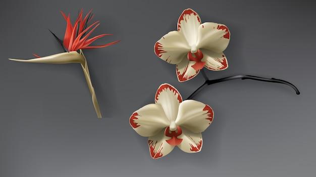 Tropikalny czarny, czerwony i złoty kwiat orchidei na ciemności Darmowych Wektorów