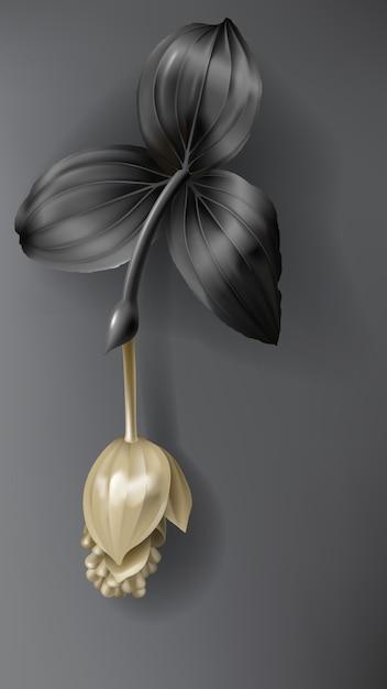 Tropikalny czarny i złoty kwiat medinilla na ciemności Darmowych Wektorów
