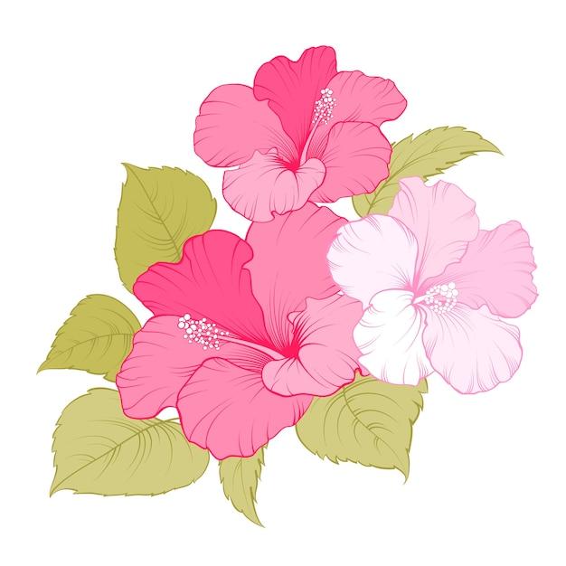 Tropikalny Kwiat Hibiskusa Darmowych Wektorów