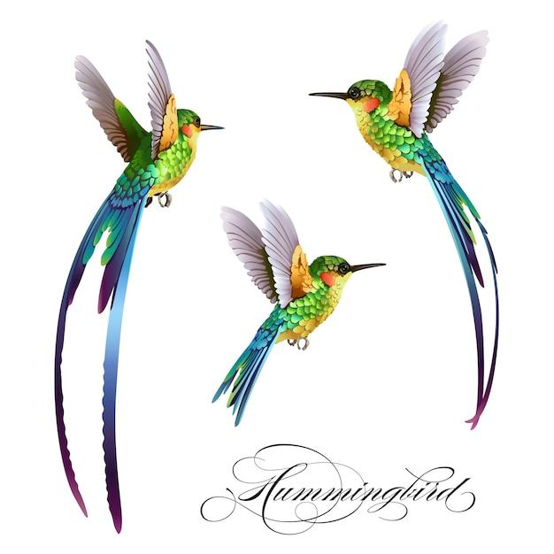 Tropikalny wzór z ptakiem Premium Wektorów