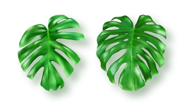Tropikalny Zielony Monstera Opuszcza Na Bielu Darmowych Wektorów