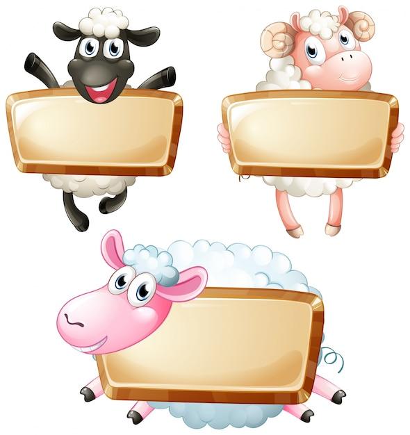 Trzy puste znaki z cute sheeps Darmowych Wektorów