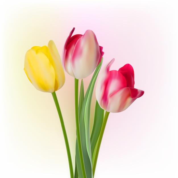 Trzy Tulipany Na Białym Tle. Premium Wektorów