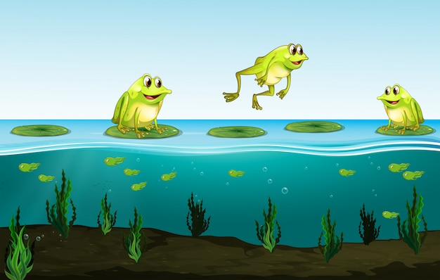 Trzy Zielone żaby Na Lilii Wodnej Premium Wektorów