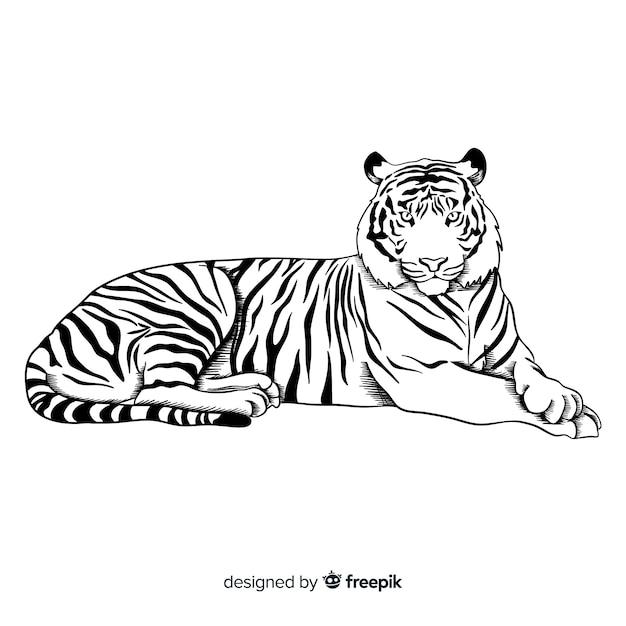 Tygrys tło Darmowych Wektorów