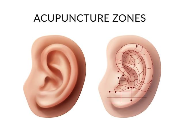 Ucho Z Punktami Akupunktury I Strefami Refleksów Na Białym Tle Premium Wektorów