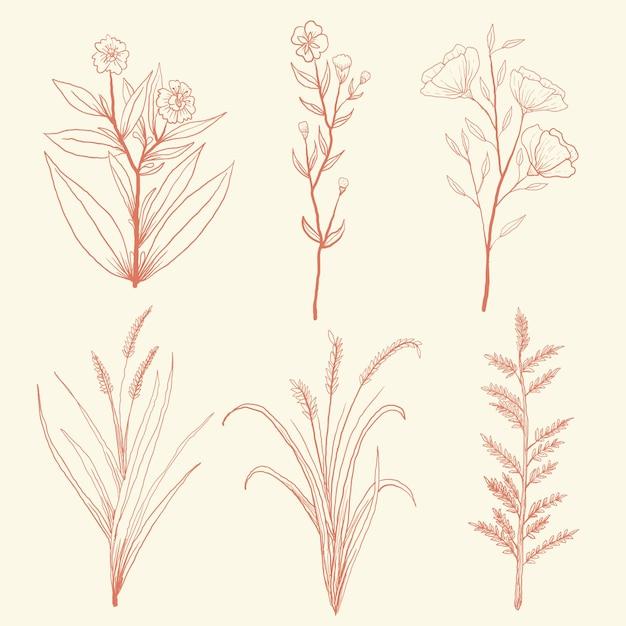 Ustaw Ręcznie Rysowane Zioła Dziki Kwiat W Stylu Vintage Premium Wektorów