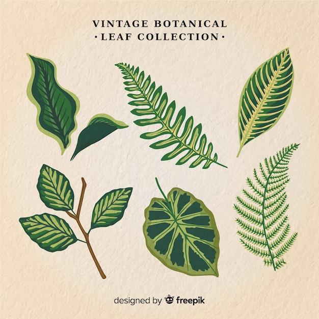 Vintage botaniczny liść kolekcja Darmowych Wektorów