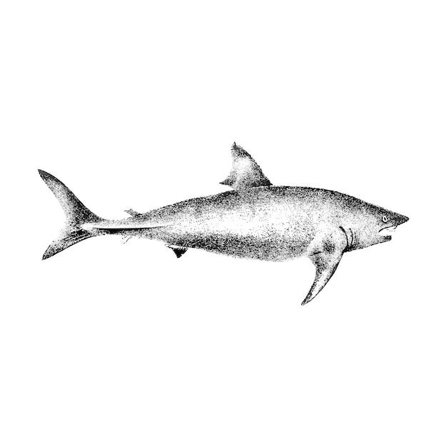 Vintage Ilustracje Basking Shark Darmowych Wektorów