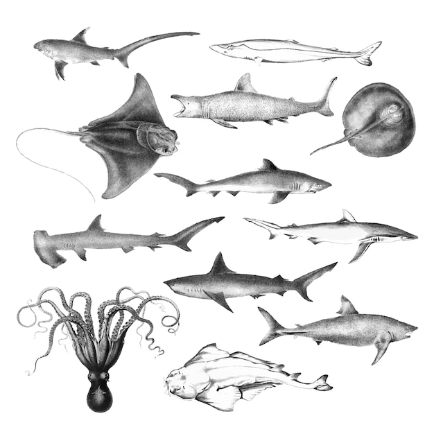 Vintage ilustracje życia morskiego Darmowych Wektorów