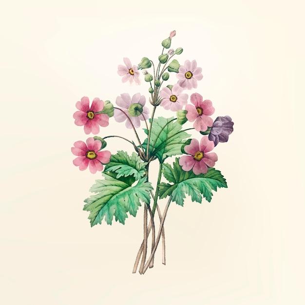 Vintage ilustracji kwiatów Darmowych Wektorów