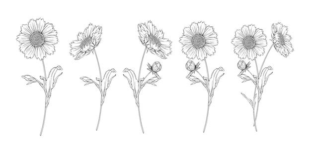 Wektor czarno-biały kontur kwiatów układ z kwiatów rumianku Premium Wektorów