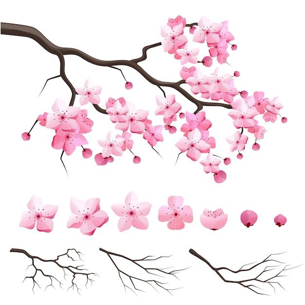 Wektor Japonia Wiśnia Sakura Gałąź Z Kwitnących Kwiatów. Konstruktor Projektu Z Gałęzi Kwitnącej Wiśni Darmowych Wektorów