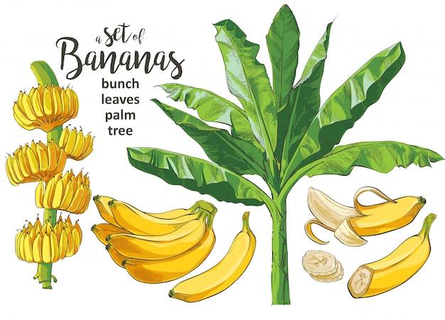 Wektor tropikalnych bananów palmowych textural bezszwowy wzór. Premium Wektorów