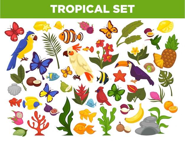 Wektor Zestaw Tropikalnych I Egzotycznych Owoców, Ptaków, Ryb I Roślin Premium Wektorów