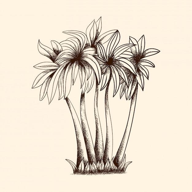 Wektorowy Wizerunek Tropikalni Drzewka Palmowe Z Gęstą Koroną I Trawą. Premium Wektorów