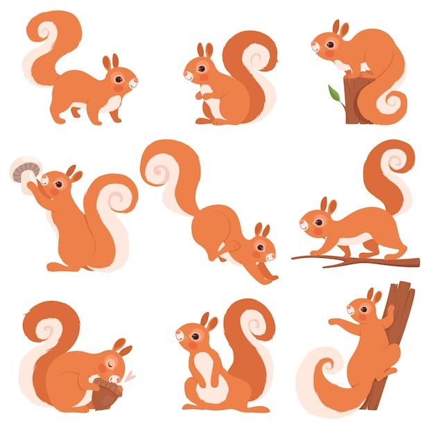 Wiewiórka śmieszne Leśne Dzikie Zwierzęta Biegające Stojące I Skaczące  Wiewiórki Kolekcja Sztuki | Premium Wektor