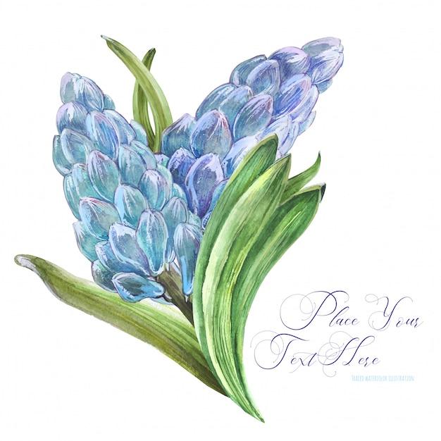 Wiosenny Bukiet Akwarela Z Kwiatami Hiacyntu Premium Wektorów