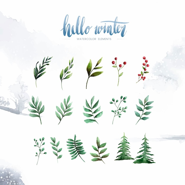 Witam zimowe rośliny i kwiaty malowane przez akwarela wektor Darmowych Wektorów