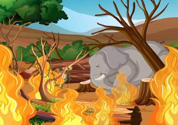 Wylesianie Słoniem I Pożarem Darmowych Wektorów