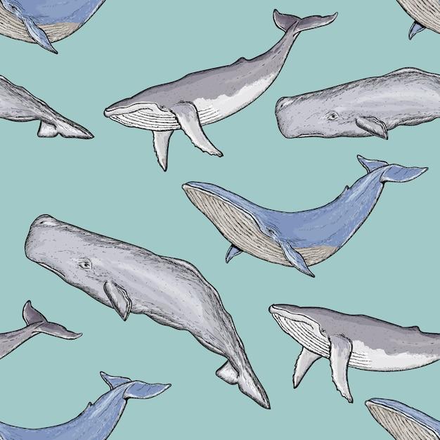 Wzór wieloryby Premium Wektorów