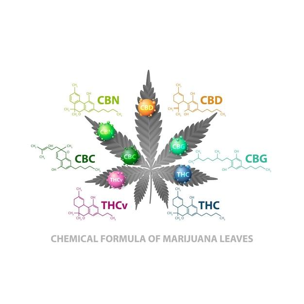 Wzory Chemiczne Naturalnych Kannabinoidów. Liść Konopi Z Cząsteczkami 3d Premium Wektorów