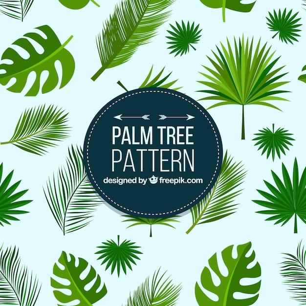 Wzory liści palmowych Darmowych Wektorów
