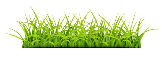 Zaloguj się z miejsca tekstowego young grass Premium Wektorów