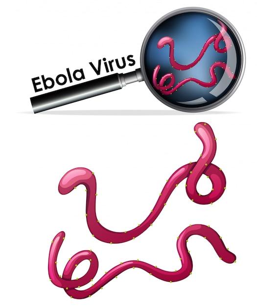Zamknij Się Izolowany Obiekt Wirusa O Nazwie Wirus Ebola Darmowych Wektorów