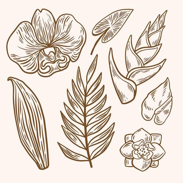 Zarys Tropikalny Kolekcja Kwiatów I Liści Darmowych Wektorów