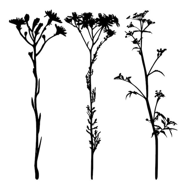 Zbiór Dzikich Kwiatów Sylwetki Na Białym Tle. Premium Wektorów