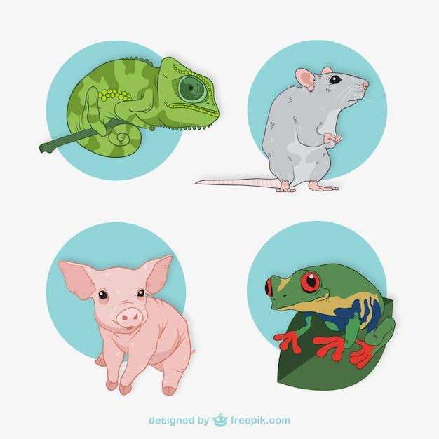 Zbiór Ilustracji Zwierząt Darmowych Wektorów