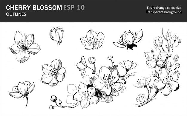 Zbiór Kwiatów Sakury. Sakura Gałąź Z Kwiatami. Premium Wektorów