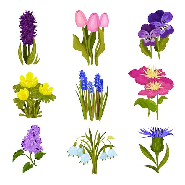 Zbiór Obrazów Wiosennych Kwiatów Premium Wektorów
