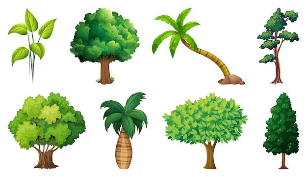 Zbiór Odmian Roślin I Drzew Darmowych Wektorów